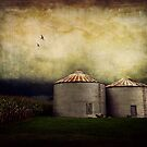 A Farmer's World by Lea  Weikert