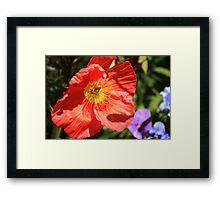 Precious Poppy Framed Print