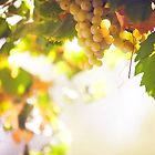 Harvest Time. Sunny Grapes VII by JennyRainbow