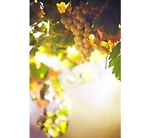 Harvest Time. Sunny Grapes VII Photographic Print