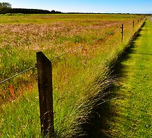 Denmark - typical landscape on the countryside by marina63