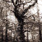 Magic Tree by Tatiana Ivchenkova