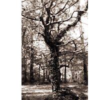 Magic Tree Photographic Print