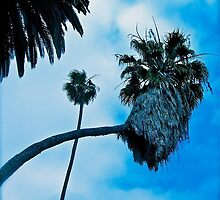 Palm Tree Intersection by Christine Chase Cooper