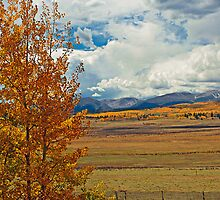 Aspens from Highway 24  by Robert Meyers-Lussier