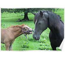 MOOO im a horse Poster