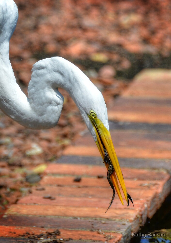 The Egret And The Frog by Kathy Baccari