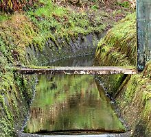 Kohala Forest Preserve Aquaduct by g-ermo