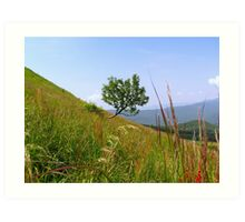 Lonely tree on a mountain slope Art Print
