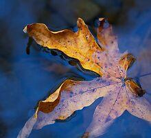 fall leaf in creek by Stephanie Macwhorter