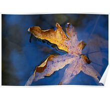 fall leaf in creek Poster