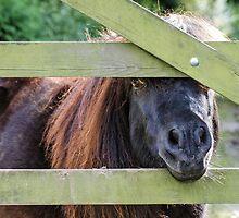 Shetland Gate by JEZ22