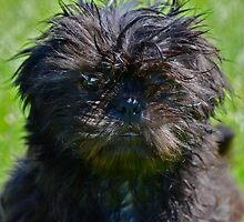 Did I really just got wet?  by Nicole  Markmann Nelson