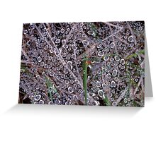 Dewdrops Greeting Card
