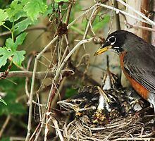 Babes In The Nest by Debbie Oppermann