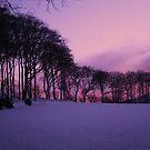 Belhelvie Fields by Jordan Moffat