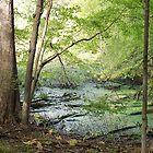 The Swamp by Diane  Kramer