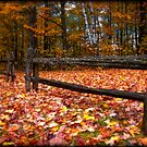 Cedar Log Fence on a Carpet of Autumn Leaves by Chantal PhotoPix
