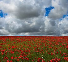 Poppy field - Eartham, West Sussex by Jennifer Vollebregt