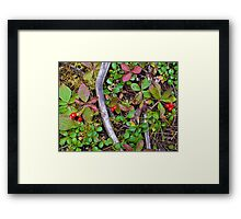forest floor- Jasper National Park Framed Print