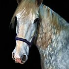 A HORSE PORTRAIT by Rob  Toombs