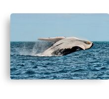 Hervey Bay Whale Watching Canvas Print