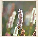 Summer Garden by pseth