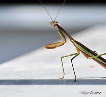 Praying Mantis by Jeff Ore