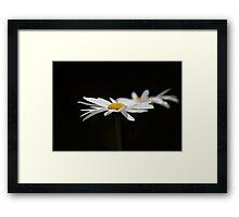 Ox Eye Daisy on Black Framed Print
