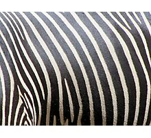 Real Zebra Stripes Photographic Print