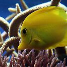 Little yellow fish by Asrais
