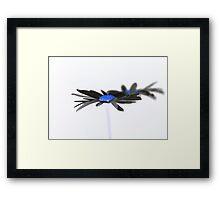 Ox Eye Daisy inverted Framed Print