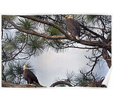 Mr & Mrs Eagle  Poster