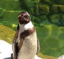 Penguin by SkyZW