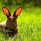 Moody Bunny by Daisy-May