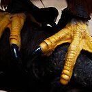 Pure Talon - Zeena's Feet  by Daisy-May