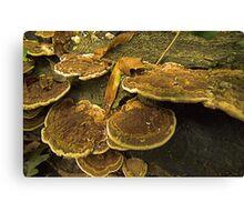Fungi Pancakes Canvas Print