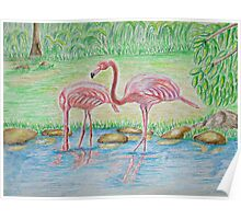 Two Flamingos Poster