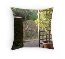 Floe & new Joey snooping closer to the house. Adelaide Hills. Throw Pillow