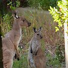'TAKE A CLOSE LOOK JNR!' We don't go there. Adelaide Hills. by Rita Blom