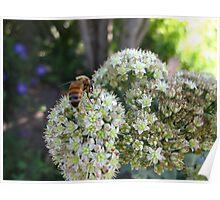 Wasp honey Poster