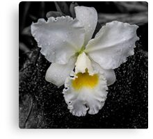 Orchid Shower Canvas Print