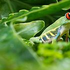 Tree Frog by Shannon Kerr