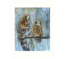 Southern boobook owls australia Art Print