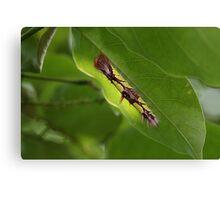 Blue Morpho Caterpillar Canvas Print