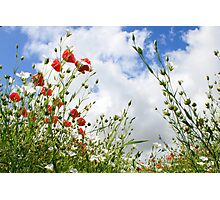 Bugs view of a poppy field - Eartham, West Sussex Photographic Print