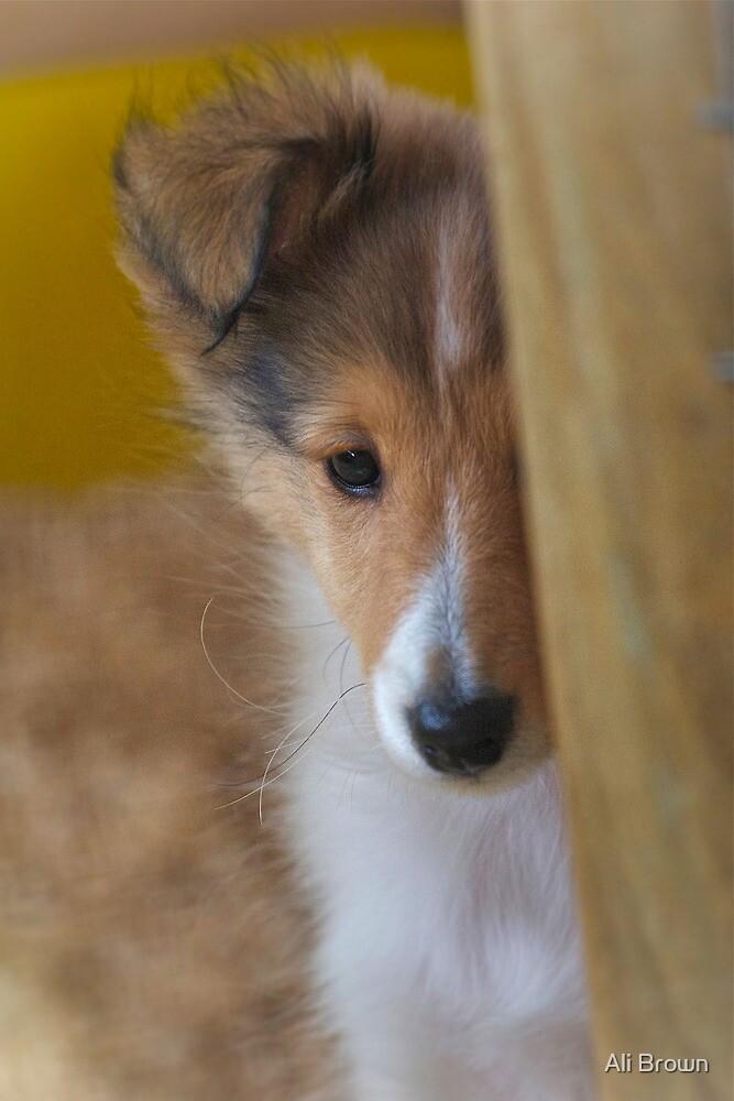 Puppy Love by Ali Brown