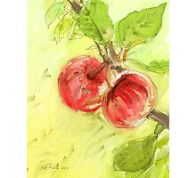 Two Red Apples - 2012 Photographic Print