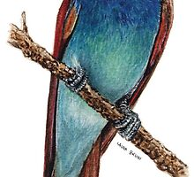bee-eater by Laura Bruni