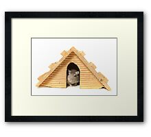 Successful mouse living in a wooden house Framed Print